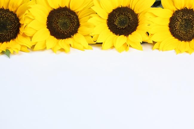 黄色向日葵高清图片素材